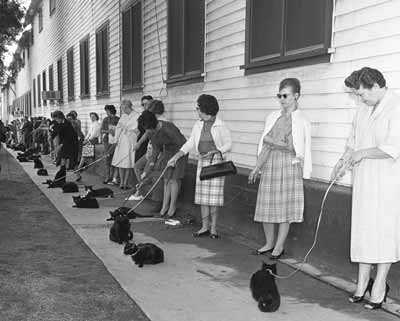 Black cats in a line