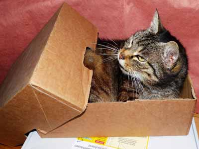 A tabby cat inside a cardboard box.