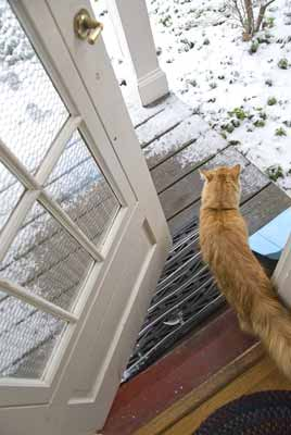 A cat using a large exterior door in cold weather