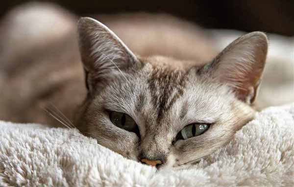 Cat facts and trivia about the felines we love!