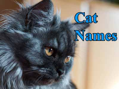 Unique cat names for your special cat
