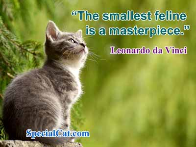 Kitten sitting in a tree with a quote about cats by Leonardo da Vinci
