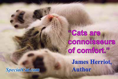 Cat quote by author James Herriot