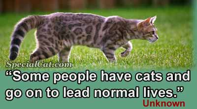 A quote about having cats and leading normal lives.
