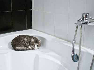 A cat relaxing in a bathtub with a shower