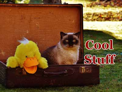 A cat looking cool inside an open suitcase